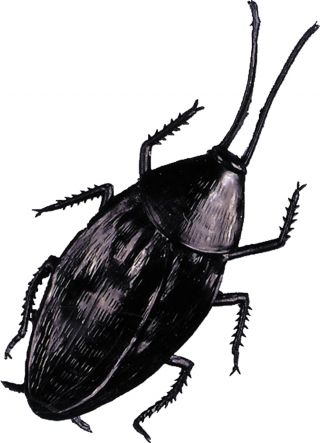 Cockroach Giant
